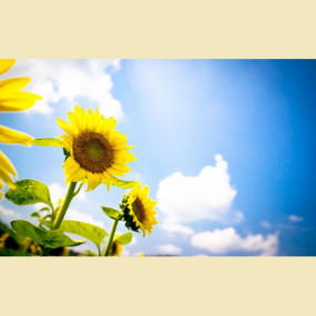 Богоявление: Христос — как солнце, душа — как подсолнух