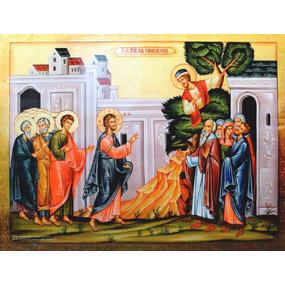 <b>14 февраля 2016 года</b> — Неделя 37-я по Пятидесятнице, о Закхее