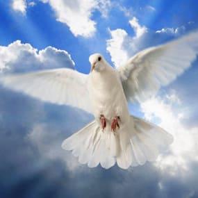 Прощеное Воскресенье и Сретение